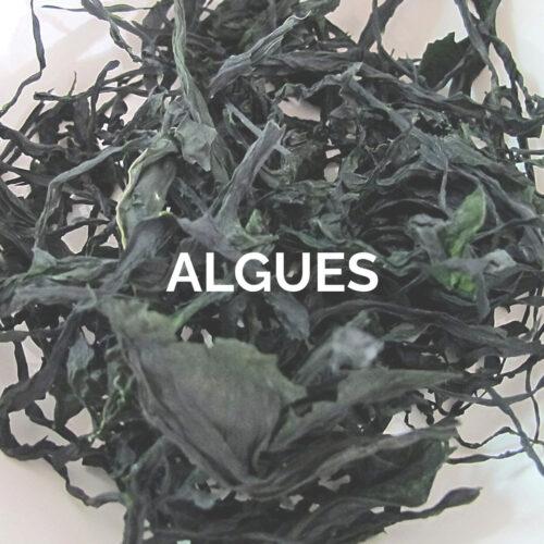 ALGUES (1)